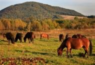 equus-ferus-pazdziernik-2011-bieszczady-wolosate-gles1620-copy