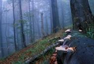 las-buk-wrzesien-2000-bieszczady-chryszczata-sl-gles1-copy