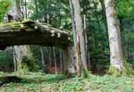 las-wrzesien-2009-bieszczady-polonina-bukowska-gles2187-copy